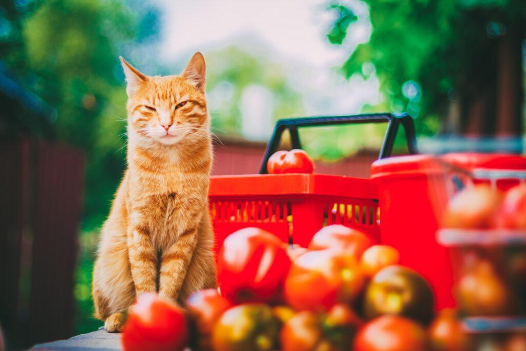 Kedilere Sebze ve Meyve Verilebilir mi?