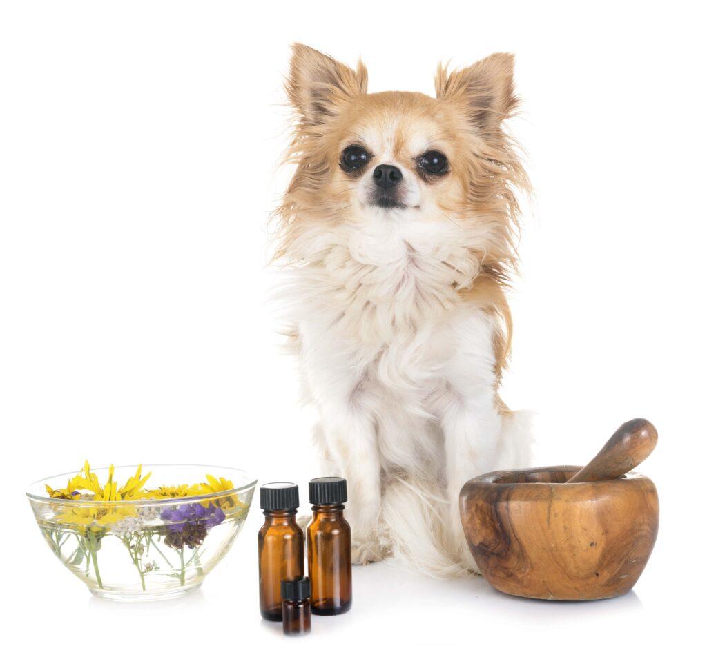 Köpeğime Vitamin Takviyesi Verebilir miyim?