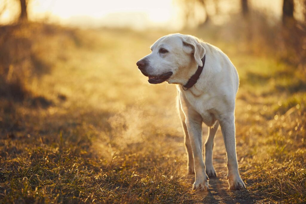 Evcil Hayvanlarda Solunum