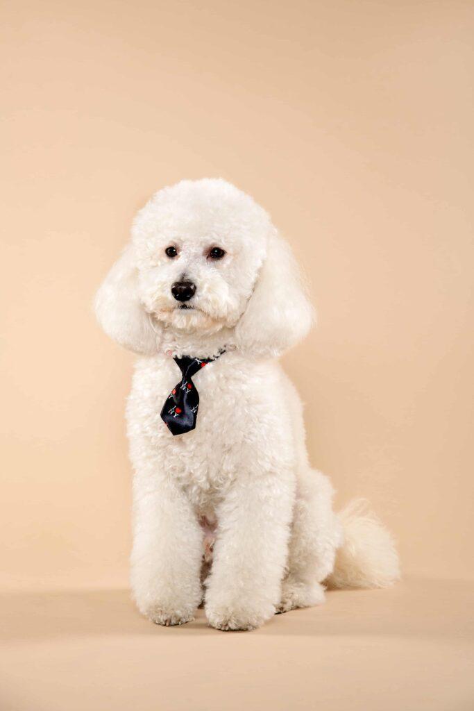 Fino Köpek Cinsleri ve Özellikleri