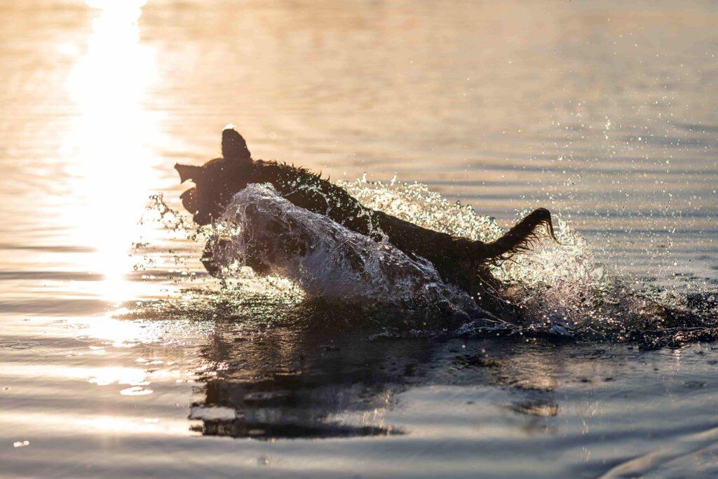 Evcil Hayvanlarda Su Hijyeninin Önemi