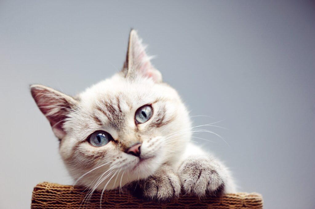 Kedimin Sağlıklı Yaşamasını İstiyorum, Neler Yapmalıyım?