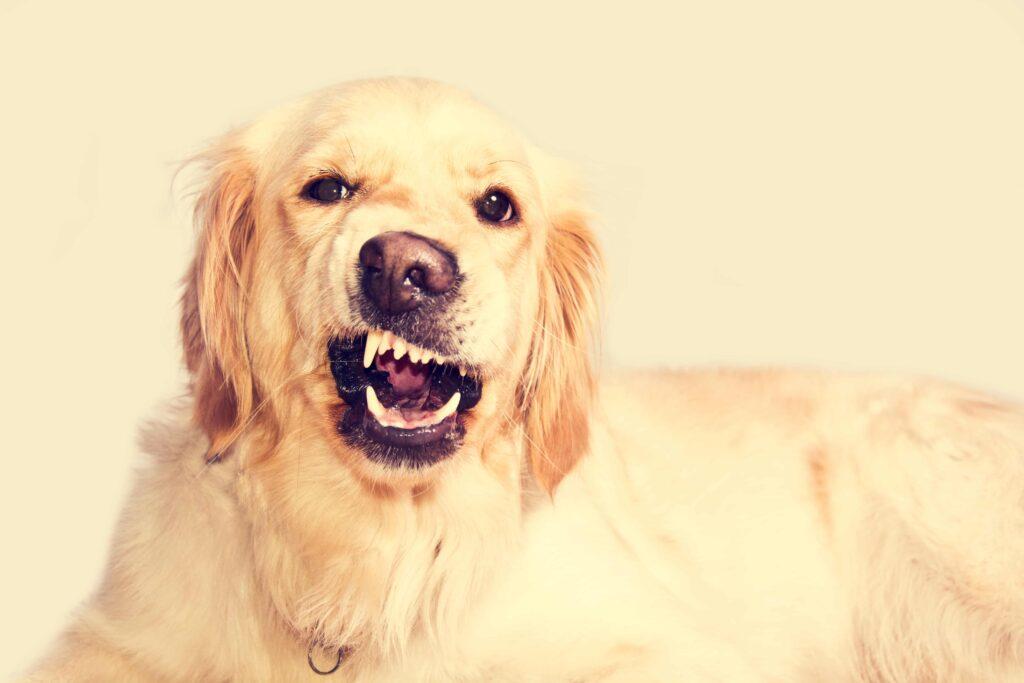 Köpekler Geceleri Neden Havlar?