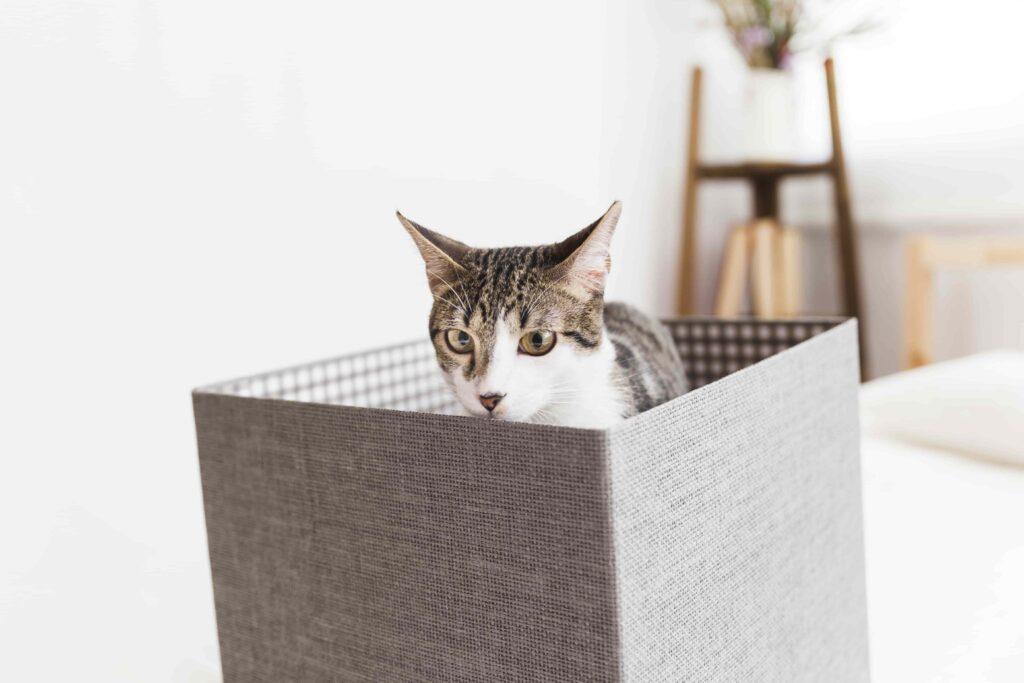 Kediler Neden Kutuları Sever?