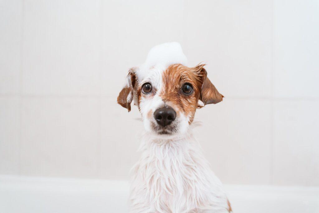 Köpek Şampuanı Seçerken Dikkat Edilmesi Gerekenler