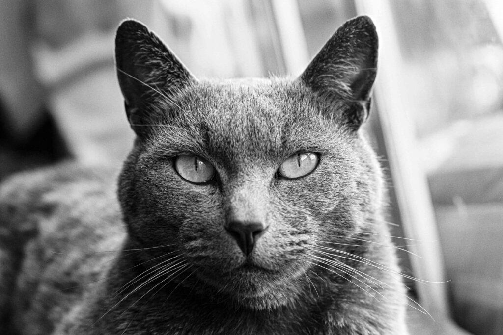 Kedilerde Kulak Bakımı Nasıl Yapılmalı?